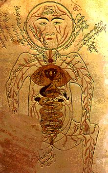 desenho da anatomia humana de Ibn Sina também conhecido pelo nome latinizado Avicena [980-1037]