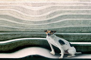 Acumulação de líquido, debaixo da retina, afecta a mácula produzindo distorção das imagens e visão turva