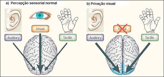 Cognição Motora em Deficientes Visuais: importância da visão