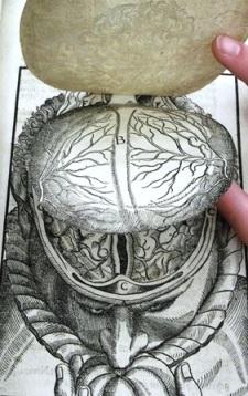 Bartisch: Anatomia do cérebro - aba 1