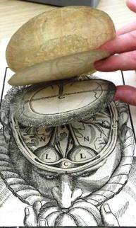 Bartisch: Anatomia do cérebro - aba 2